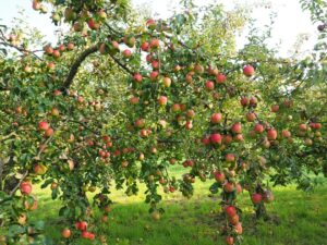 Win a Small Orchard
