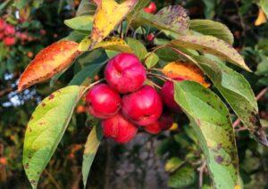 Garden Design Ashridge Nurseries Blog Recipes